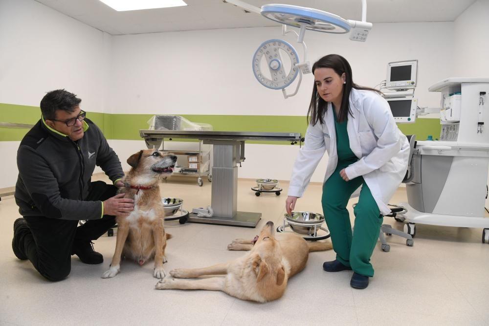 Instalaciones hospital veterinario 4 de Octubre
