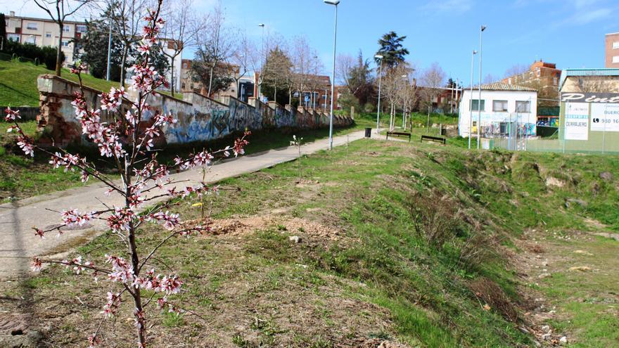 El Ayuntamiento de Zamora realiza una plantación de árboles en La Josa
