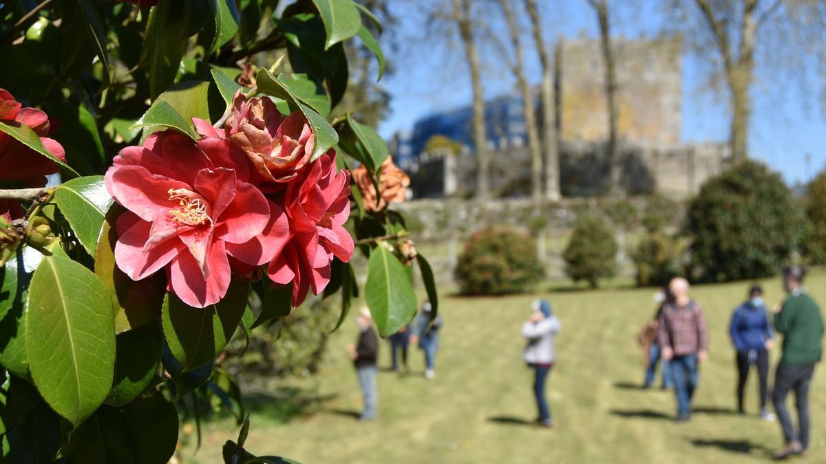 Vuelven las visitas guiadas a los Jardines del Castillo de Soutomaior.