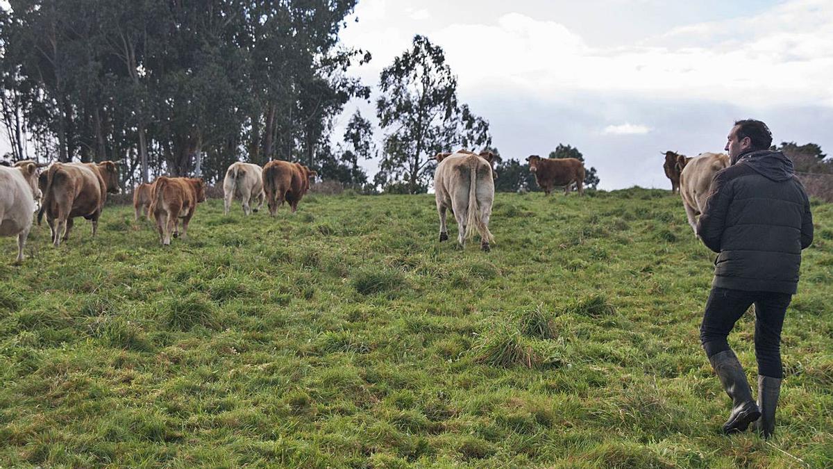 Un ganadero con su explotación de vacuno en un prado. |   // BERNABÉ / ANA AGRA