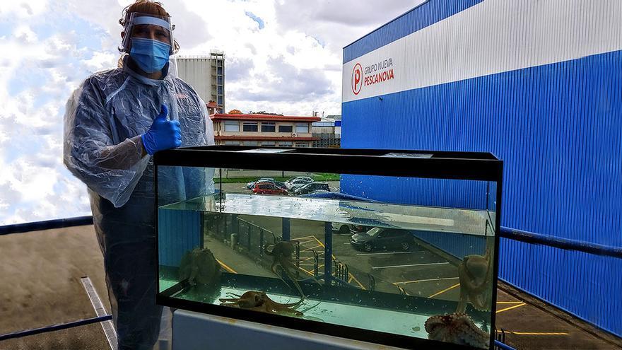Pescanova invertirá 65 millones en su primera granja de pulpo en Gran Canaria