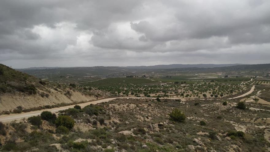 Los proyectos de plantas solares afectan a más de 80 hectáreas de suelo forestal de Escalona