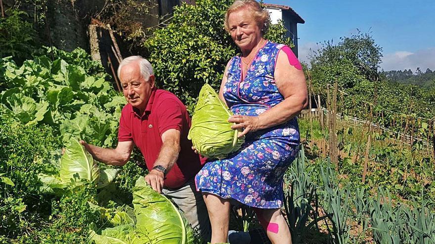 Unos vecinos de Villaviciosa cultivan lombardas de más de cinco kilos de peso