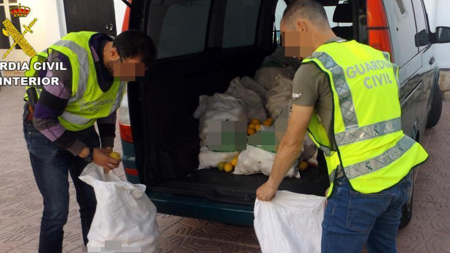 Cae una red especializada en el robo de limones en el Valle del Guadalentín