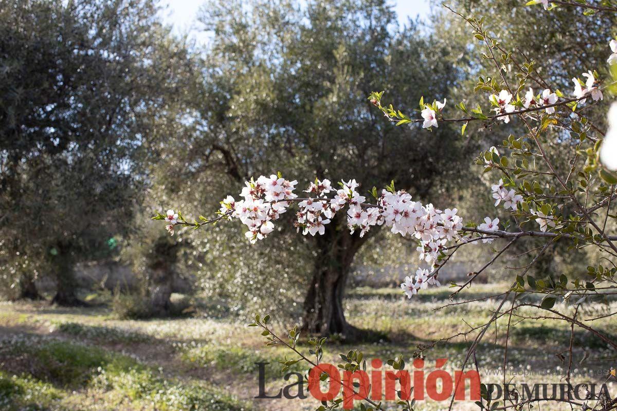 FuentesdelMarqués_Floración015.jpg