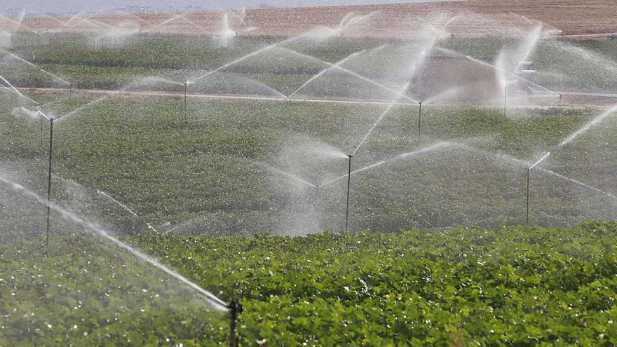 Córdoba prevé recoger más de 10.100 toneladas de algodón