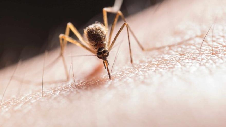 Cómo usar bien el repelente de mosquitos