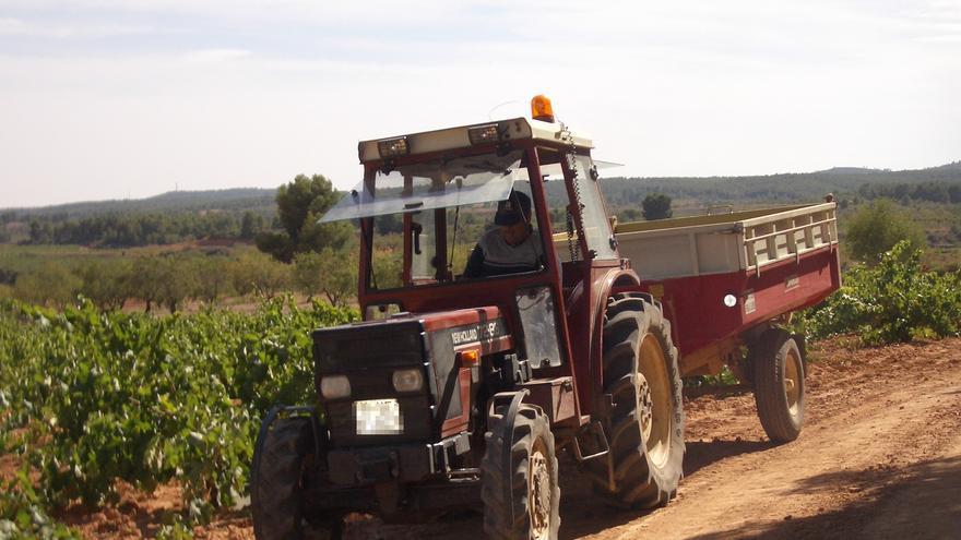 El Ministerio homologa contratos-tipo de venta de uva para hacer vino