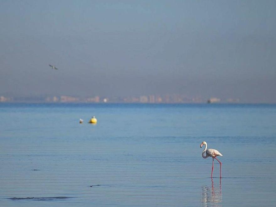 PSRM   Caos medioambiental en la Región de Murcia