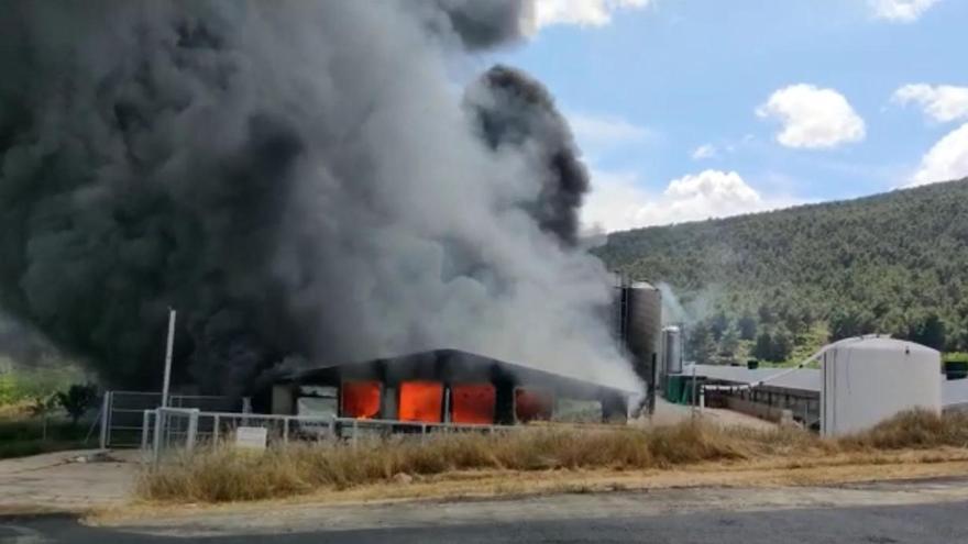 Mueren 10.000 gallinas en el incendio de una granja en Titaguas