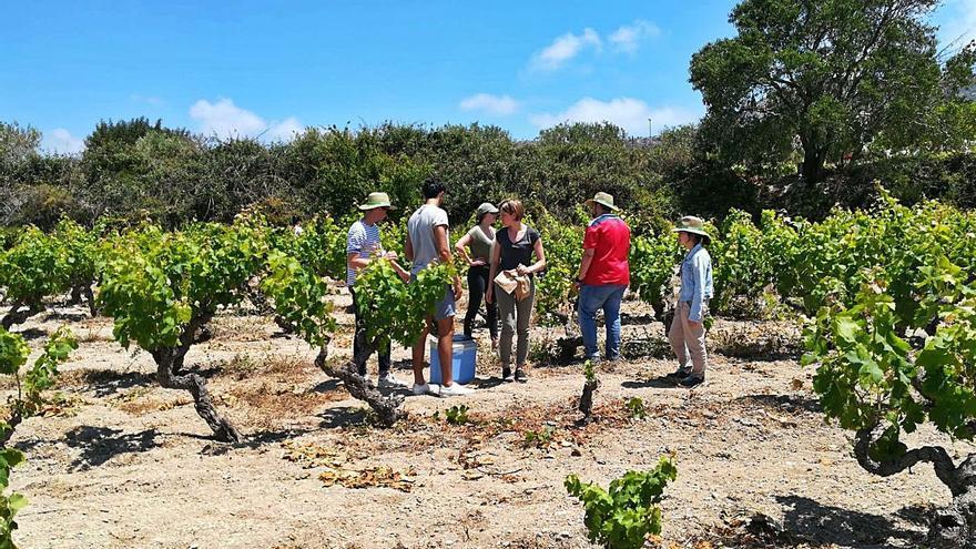 La superficie de uva ecológica casi se triplica en el último semestre