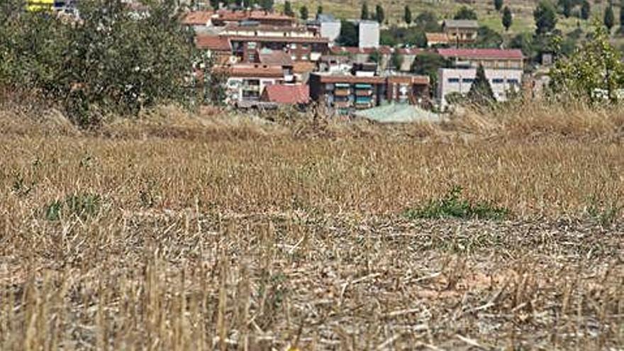 Agents rurals investiguen l'origen de la forta pudor de purins al sector de Callús