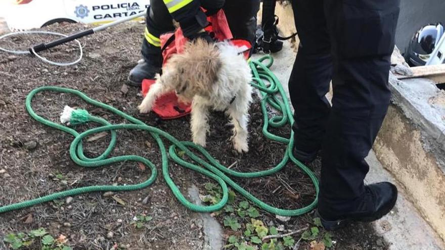Bomberos y Policía Local rescatan a un perro en Lo Campano