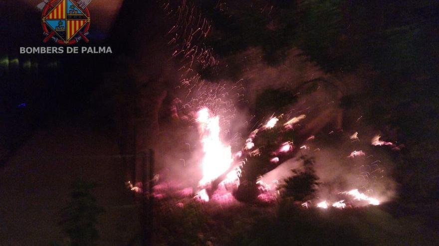 Un algarrobo se quema en el Parc Bit