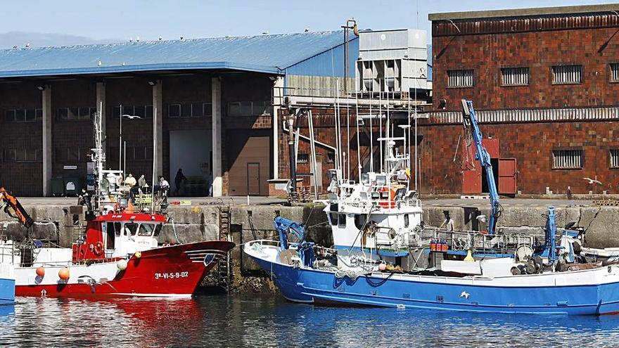 Asturias tendrá su primera Organización de Productores de Pesca
