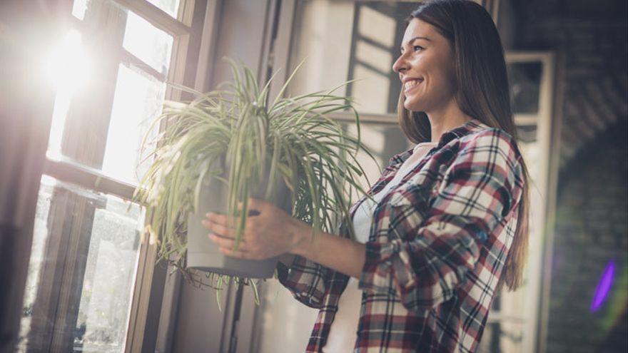 Las plantas de interior que puedes que debes poner si quieres tener la casa fresca este verano