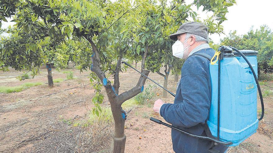 Los agricultores exigen a Mollà que medie en Madrid para usar clorpirifos contra el 'cotonet' en Castellón