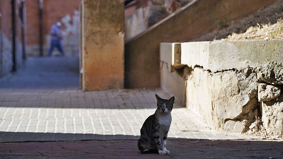 Uno de los gatos de la colonia en la plaza Argentina.