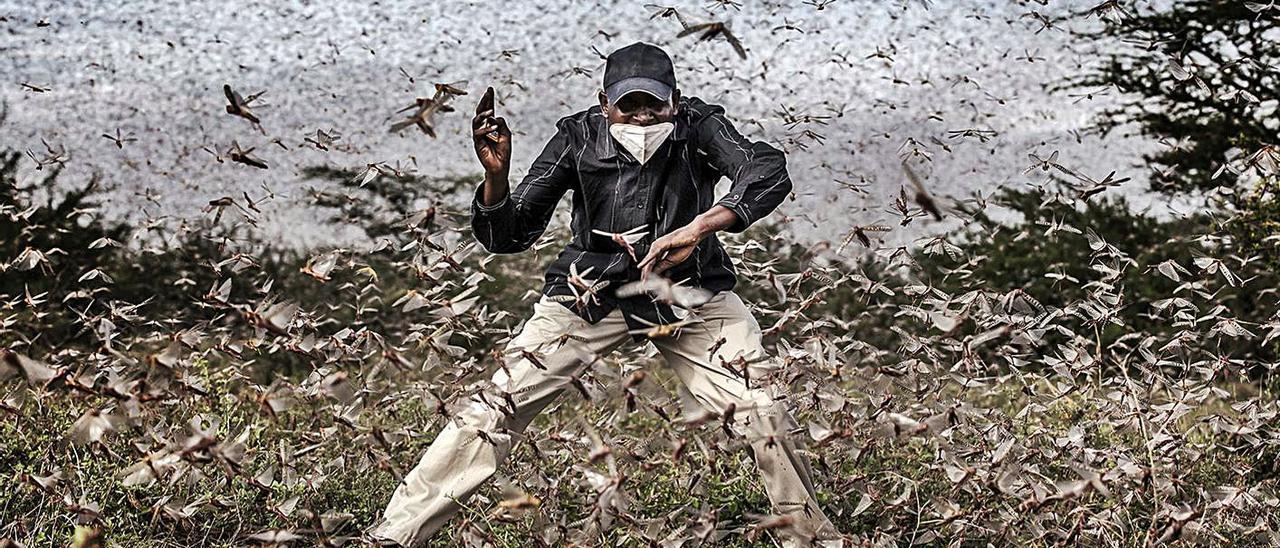 Lucha contra la invasión de la langosta en el este de África. | LUIS TATO