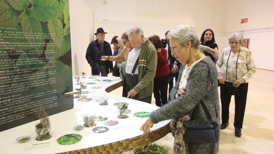 """La exposición """"Especias: El universo del Sabor"""" llega a la Sede de la UA"""