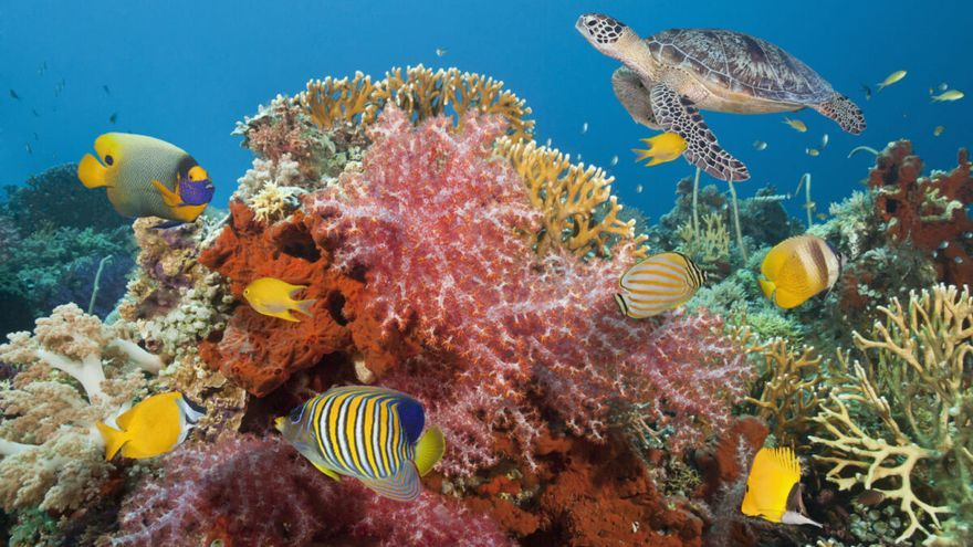 Descubren un arrecife de 'supercorales' resistentes al CO2