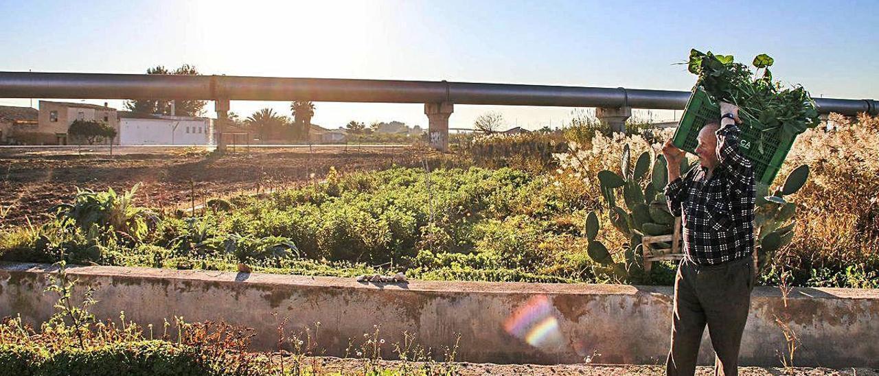 Un agricultor carga con un cesto con hortalizas en la Vega Baja. Al fondo, conducciones del trasvase Tajo-Segura.