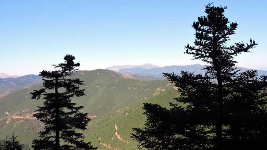 Sendero 5 de la Gran Senda | Pinsapares de Sierra Bermeja y Los Reales