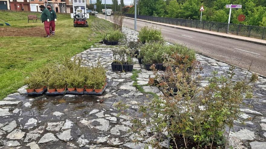 La recuperación de zonas degradadas en Benavente amplía los espacios verdes para el ocio