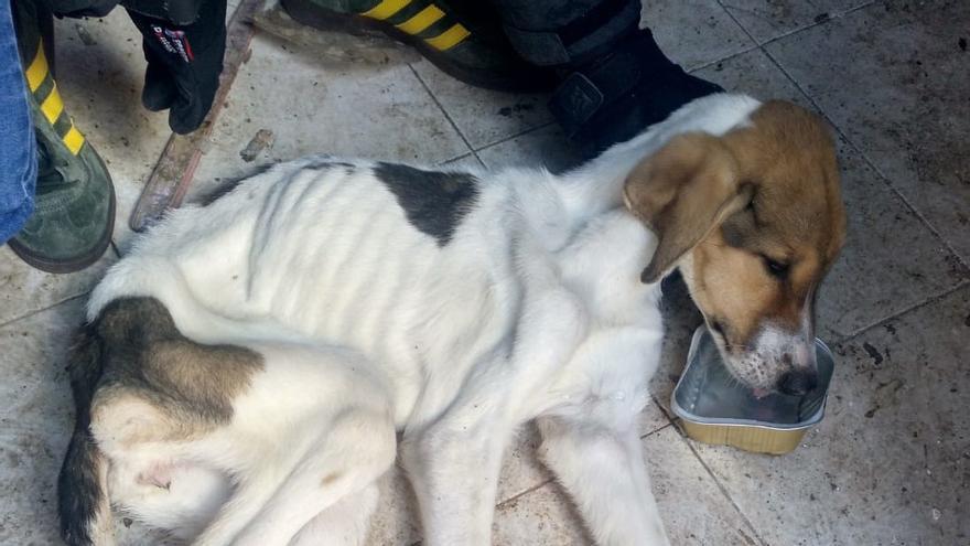 Detenida una persona por maltratar a dos perros en su domicilio