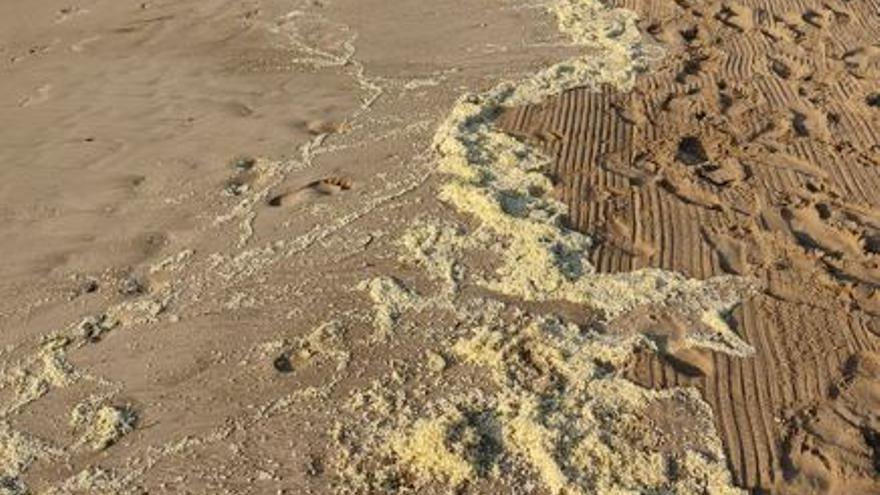 Un manto de huevos de caracol aparace en la playa de Port de Sagunt