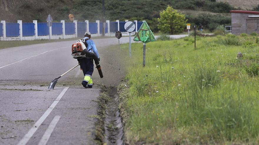 """La maleza engulle las carreteras e irrita a los conductores: """"Es un peligro extra"""""""