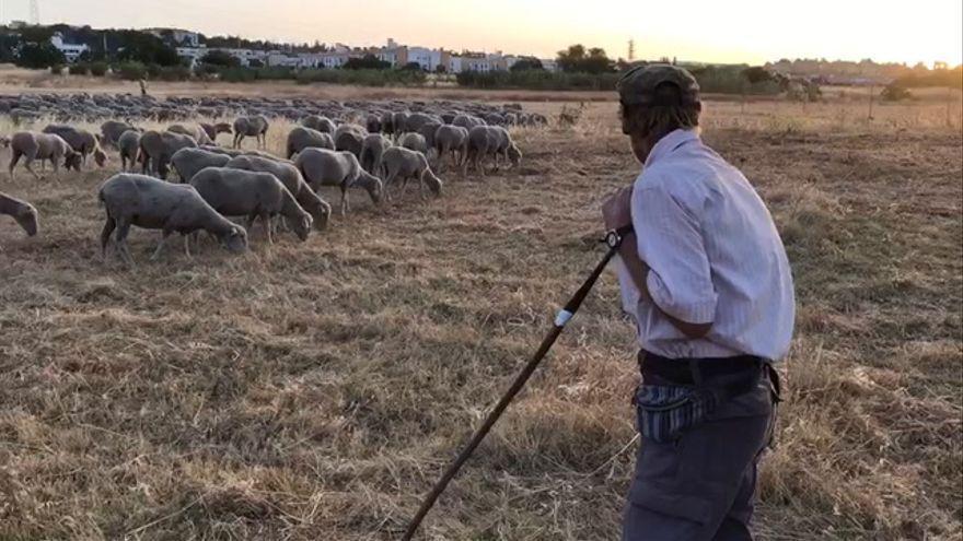 La Junta de Andalucía muestra su apoyo al sector ovino de Córdoba