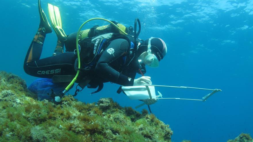 Els promotors del parc eòlic marí del golf de Roses engeguen dues campanyes de seguiment d'aus marines i cetacis