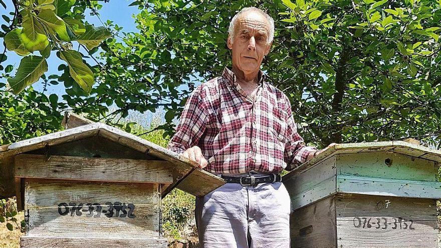 Las abejas regresan a Villaviciosa tras años atacadas por la velutina