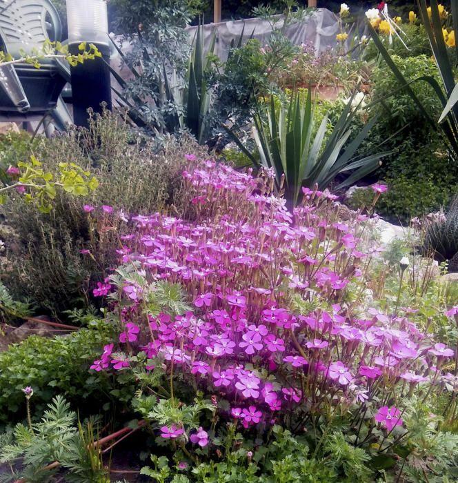 Les plantes i les flors del jardí.