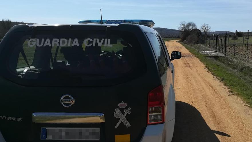 Detenido en Zamora por lanzar a su perro con violencia contra el suelo
