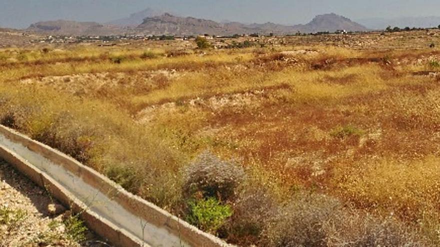 San Vicente creará un «banco de tierras» para recuperar cultivos