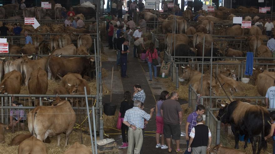 Avilés suspende por segundo año el Certamen de ganado de San Agustín
