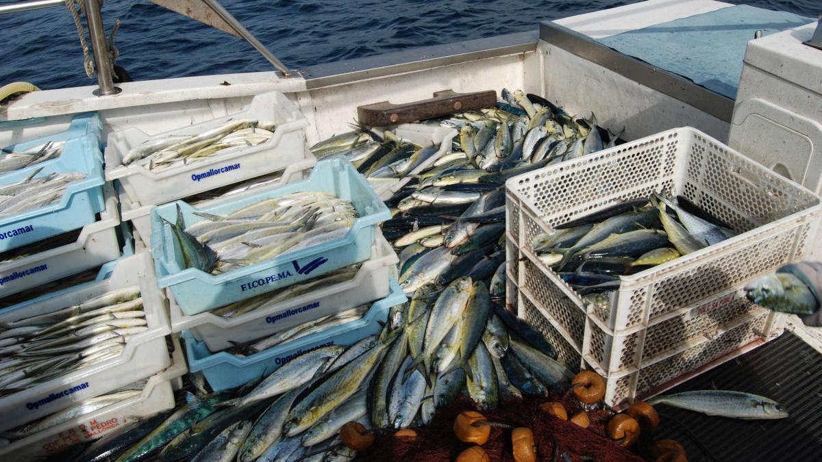 La temporada de pesca de la 'llampuga' comienza con 2.560 kilos capturados
