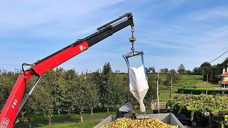 Ullama deriva sus primeros 25.000 kilos de manzana del año a la planta de Chantada