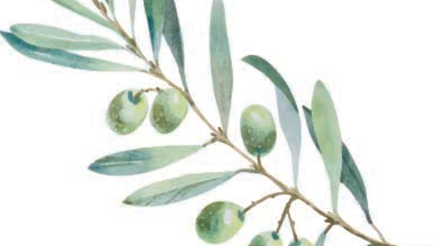 Els olivars mallorquins i el medi ambient