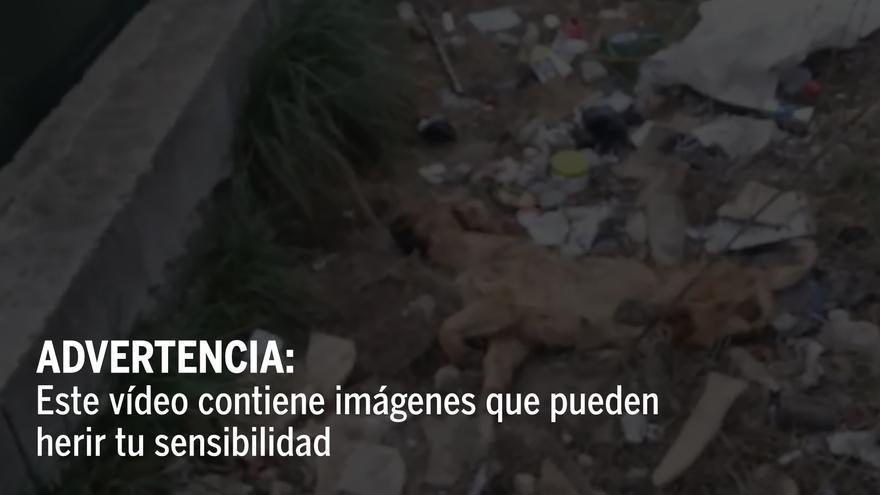Piden ayuda para identificar a los autores de la cruel muerte de un perro en Xàtiva