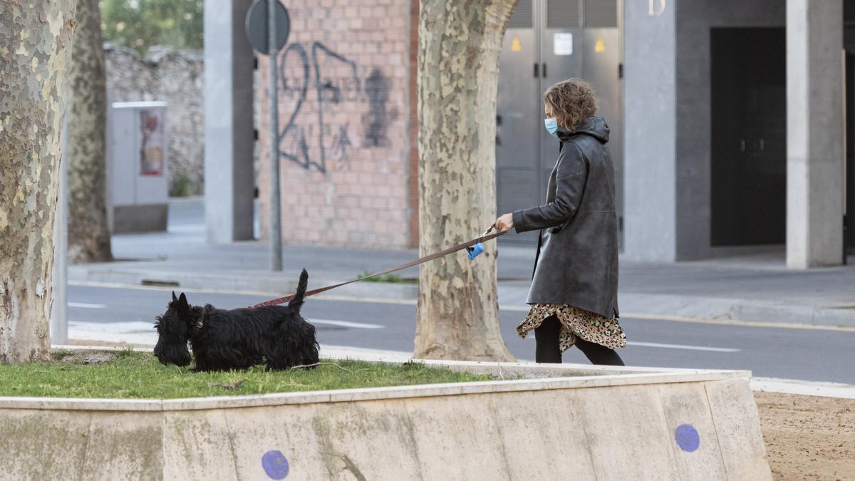 Figueres es vol consolidar com a ciutat amiga dels animals