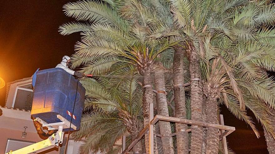 Parques y jardines combate las plagas de picudo rojo en las palmeras