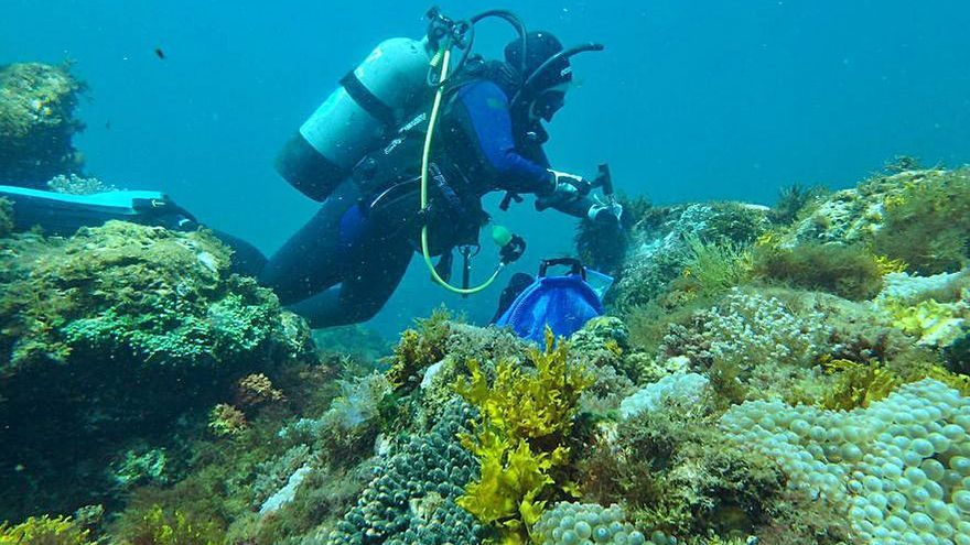 La investigadora Viviana Peña lidera un estudio internacional sobre la acidez en los océanos