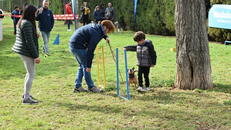 Alfafar celebra la bendición de animales de Sant Antoni y la Feria Pro-Adopt