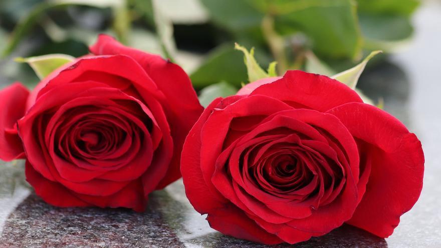 Las mejores plantas y flores para el día de Todos los Santos