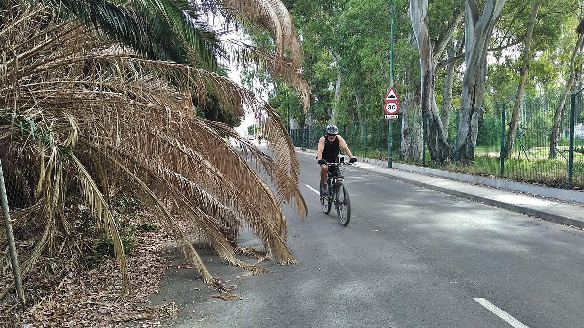 La palmera desplomada en la Carretera del Campo de Golf, el pasado martes.