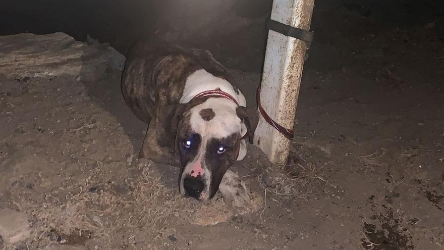 Abandonan y atan a un perro en Las Palmas de Gran Canaria