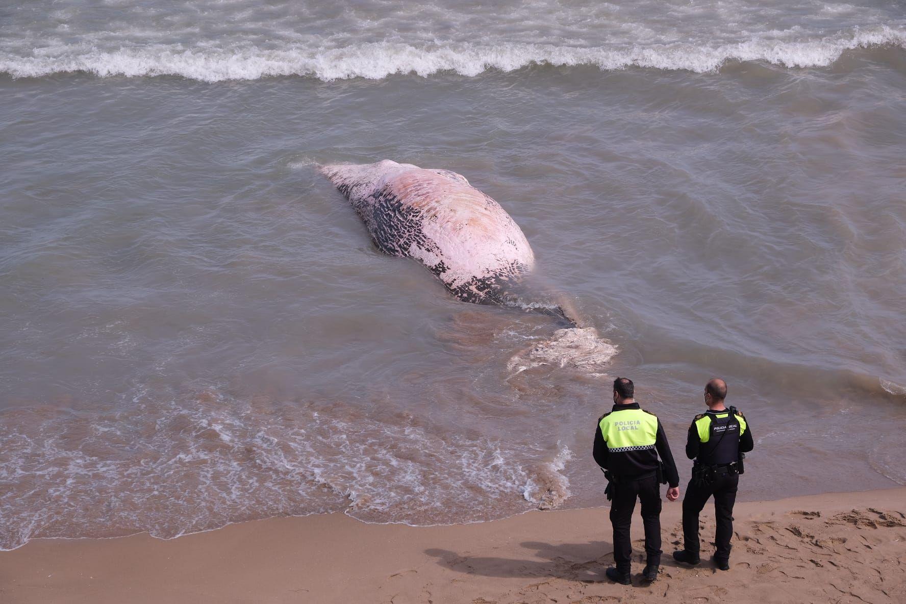 Aparece una ballena en Guadamar